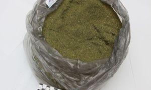 Выращивание конопли: ст. 231 ук рф в 2020 году, незаконное культивирование