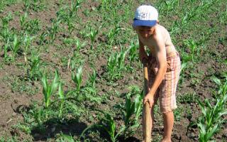 Эксплуатация детского труда: статья коап и ук рф в 2020 году — что такое, наказание