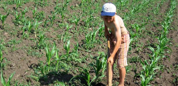 Эксплуатация детского труда: статья КоАП и УК РФ в 2020 году - что такое, наказание