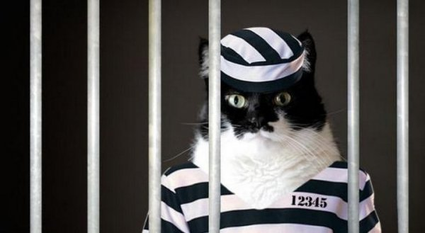 Предмет преступления в уголовном праве в 2020 году